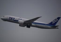 takikoki50000さんが、関西国際空港で撮影した全日空 787-8 Dreamlinerの航空フォト(写真)