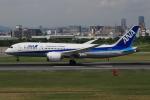 キイロイトリさんが、伊丹空港で撮影した全日空 787-8 Dreamlinerの航空フォト(写真)