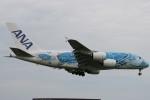 さおまるさんが、成田国際空港で撮影した全日空 A380-841の航空フォト(写真)