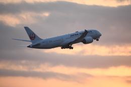SKY☆MOTOさんが、成田国際空港で撮影した日本航空 787-8 Dreamlinerの航空フォト(飛行機 写真・画像)