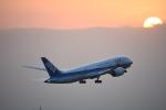 SKY☆MOTOさんが、成田国際空港で撮影した全日空 787-8 Dreamlinerの航空フォト(写真)
