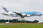 Wings Flapさんが、成田国際空港で撮影した全日空 A380-841の航空フォト(写真)