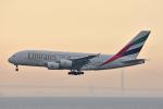 ITM44さんが、関西国際空港で撮影したエミレーツ航空 A380-861の航空フォト(写真)