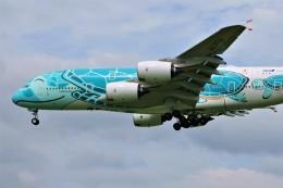 yoshibouさんが、成田国際空港で撮影した全日空 A380-841の航空フォト(写真)