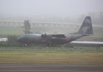 タミーさんが、仙台空港で撮影した航空自衛隊 C-130H Herculesの航空フォト(写真)