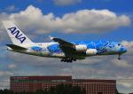 タミーさんが、成田国際空港で撮影した全日空 A380-841の航空フォト(写真)
