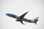 SKY☆MOTOさんが、関西国際空港で撮影した日本トランスオーシャン航空 737-8Q3の航空フォト(写真)