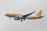 kuro2059さんが、台湾桃園国際空港で撮影したスクート A320-232の航空フォト(写真)
