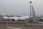 CL&CLさんが、羽田空港で撮影した日本航空 737-846の航空フォト(写真)