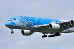 mojioさんが、成田国際空港で撮影した全日空 A380-841の航空フォト(飛行機 写真・画像)