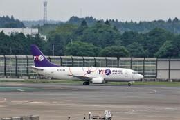 T.Sazenさんが、成田国際空港で撮影したYTOカーゴ・エアラインズ 737-36Q(SF)の航空フォト(飛行機 写真・画像)