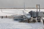 Ariesさんが、函館空港で撮影した全日空 737-881の航空フォト(写真)