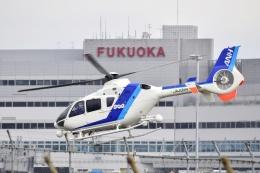 frappéさんが、福岡空港で撮影したオールニッポンヘリコプター EC135T2の航空フォト(飛行機 写真・画像)