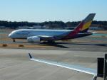 kiyohsさんが、成田国際空港で撮影したアシアナ航空 A380-841の航空フォト(写真)