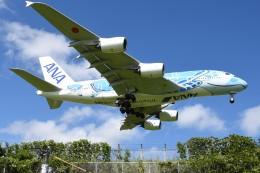 さくらの城南山。さんが、成田国際空港で撮影した全日空 A380-841の航空フォト(写真)