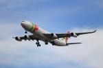 kenzy201さんが、リスボン・ウンベルト・デルガード空港で撮影したTAPポルトガル航空 A340-312の航空フォト(写真)