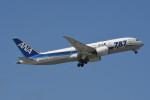 kuro2059さんが、那覇空港で撮影した全日空 787-8 Dreamlinerの航空フォト(写真)