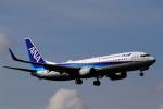 こだしさんが、伊丹空港で撮影した全日空 737-881の航空フォト(写真)