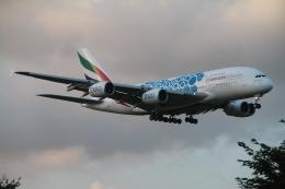 RAOUさんが、成田国際空港で撮影したエミレーツ航空 A380-861の航空フォト(写真)