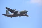 kwnbさんが、名古屋飛行場で撮影した航空自衛隊 C-130H Herculesの航空フォト(写真)