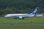 神宮寺ももさんが、岡山空港で撮影した全日空 737-881の航空フォト(写真)