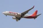 BTYUTAさんが、インディラ・ガンディー国際空港で撮影したスパイスジェット 737-8GJの航空フォト(写真)