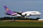 tassさんが、成田国際空港で撮影したタイ国際航空 A380-841の航空フォト(飛行機 写真・画像)