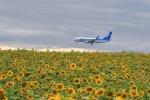 new_2106さんが、女満別空港で撮影した全日空 737-781の航空フォト(写真)