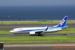 湖景さんが、羽田空港で撮影した全日空 737-881の航空フォト(写真)
