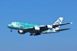 Shin-chaさんが、成田国際空港で撮影した全日空 A380-841の航空フォト(写真)