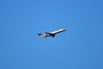 beimax55さんが、成田国際空港で撮影したアイベックスエアラインズ CL-600-2C10 Regional Jet CRJ-702ERの航空フォト(写真)
