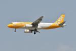 ポン太さんが、スワンナプーム国際空港で撮影したスクート A320-232の航空フォト(写真)