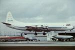 tassさんが、マイアミ国際空港で撮影したアンティリアン・エアラインズ L-188A(F) Electraの航空フォト(写真)