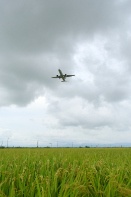 Dreamer-K'さんが、庄内空港で撮影した全日空 A321-272Nの航空フォト(飛行機 写真・画像)