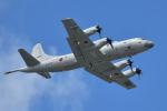 saoya_saodakeさんが、下総航空基地で撮影した海上自衛隊 P-3Cの航空フォト(写真)