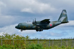 Dojalanaさんが、函館空港で撮影した航空自衛隊 C-130H Herculesの航空フォト(写真)