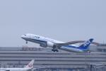 Shin-chaさんが、羽田空港で撮影した全日空 787-8 Dreamlinerの航空フォト(写真)