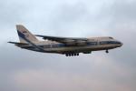 北の熊さんが、新千歳空港で撮影したヴォルガ・ドニエプル航空 An-124-100 Ruslanの航空フォト(飛行機 写真・画像)
