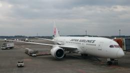 kumachanさんが、成田国際空港で撮影した日本航空 787の航空フォト(飛行機 写真・画像)