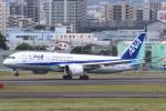 セブンさんが、伊丹空港で撮影した全日空 787-8 Dreamlinerの航空フォト(写真)
