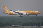 OMAさんが、新千歳空港で撮影したスクート 787-8 Dreamlinerの航空フォト(飛行機 写真・画像)