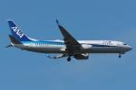 木人さんが、成田国際空港で撮影した全日空 737-8ALの航空フォト(写真)