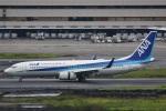 camelliaさんが、羽田空港で撮影した全日空 737-881の航空フォト(写真)