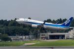 こうきさんが、成田国際空港で撮影した全日空 737-881の航空フォト(写真)