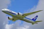 ちゃぽんさんが、成田国際空港で撮影した全日空 787-8 Dreamlinerの航空フォト(飛行機 写真・画像)
