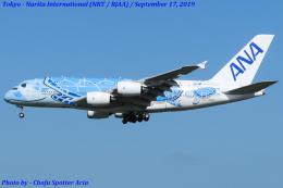 Chofu Spotter Ariaさんが、成田国際空港で撮影した全日空 A380-841の航空フォト(写真)