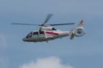 木人さんが、成田国際空港で撮影した東邦航空 AS365N2 Dauphin 2の航空フォト(写真)