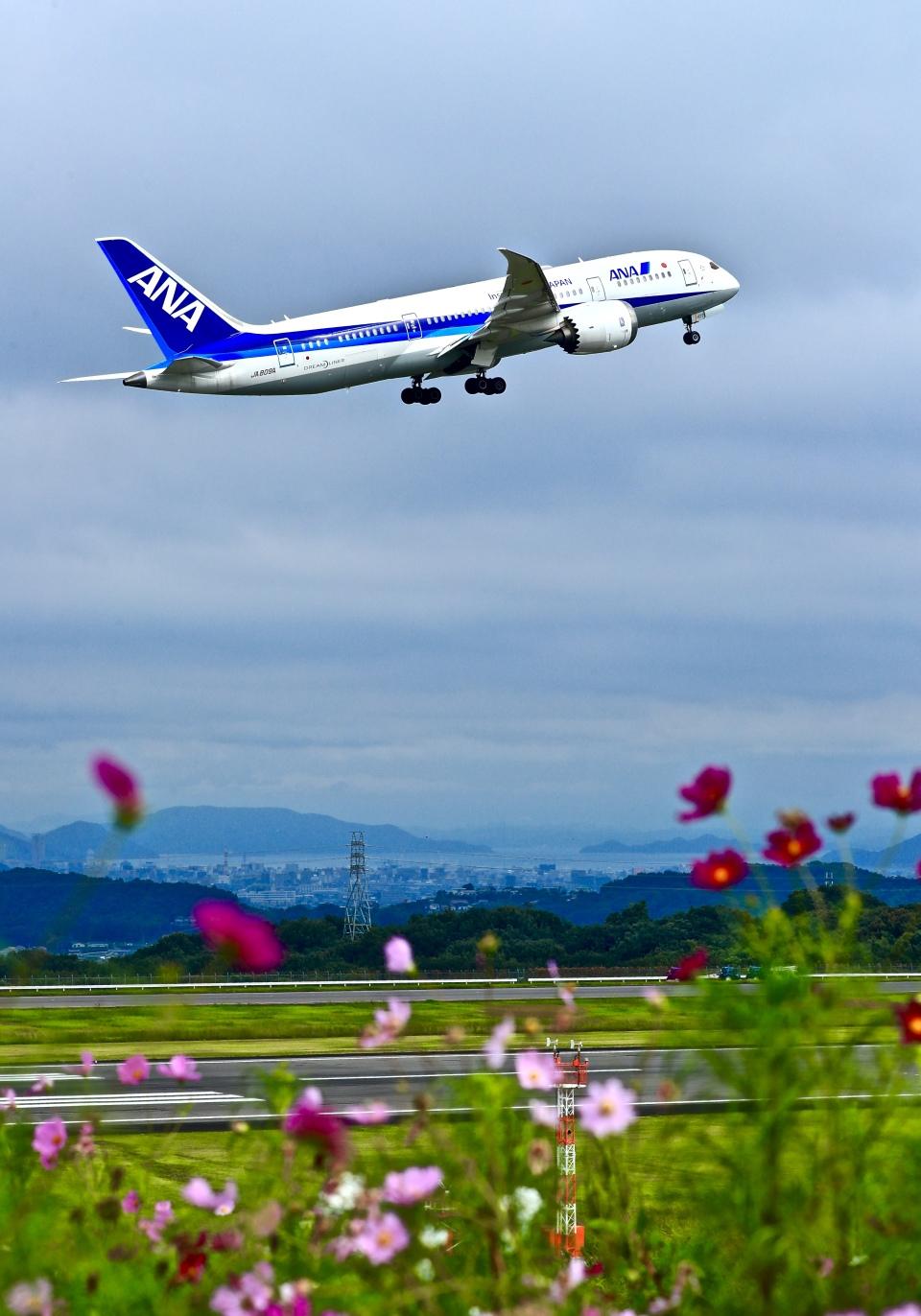 くれないさんの全日空 Boeing 787-8 Dreamliner (JA809A) 航空フォト