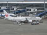 くまのんさんが、中部国際空港で撮影した日本航空 737-846の航空フォト(写真)