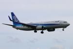 Kuuさんが、鹿児島空港で撮影した全日空 737-881の航空フォト(飛行機 写真・画像)